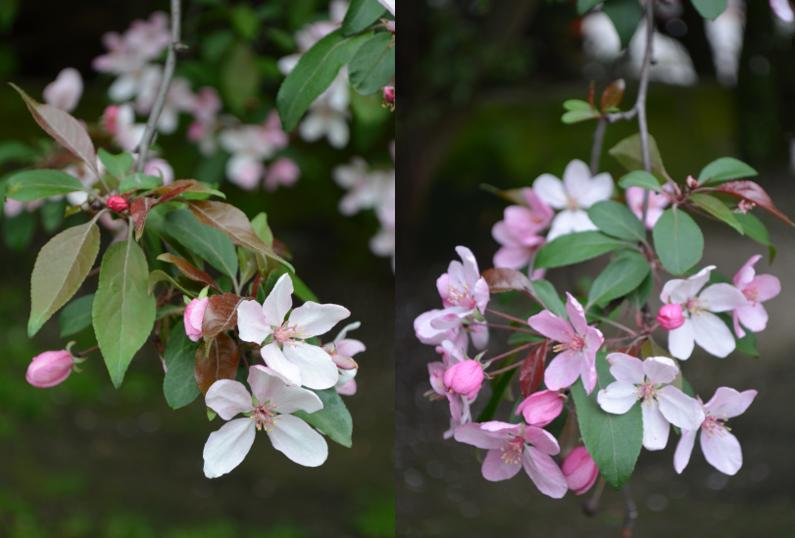 kwiaty-razem